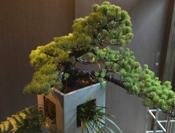 BonBox(箱型盆栽鉢)